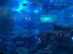 An open view of the aquarium inside the Dubai Mall