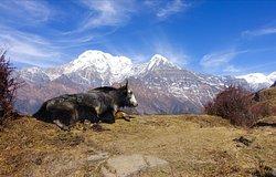 Must be the nicest trek in Nepal