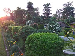 Side garden view during sunset.