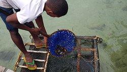 Récupération des crabes dans le vivier