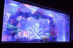 Salt Life Food Shack Fernandina Beach fish tank