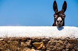 """Our Donkey """"Apollo 13"""""""