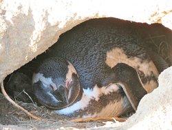 Monumento Natural Los Pinguinos