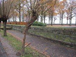 Lieux de souvenir avec cet arbre qui est mort et à encore la vie en lui