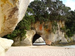 New Zealand Coromandel Dig Your Spa Beach Day Tours Coromandel Shore Excursion Hahei Cathedral Cove Walk Hotwater Beach Pool
