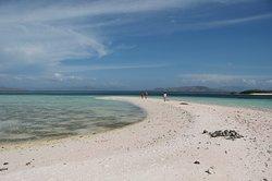 Tikka makassar island