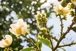 Tropical plants everywhere