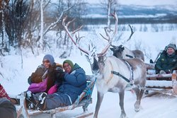 Enjoy reindeer sledding, an unforgettable experience