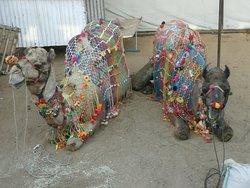 Decorative camels on a smoke break