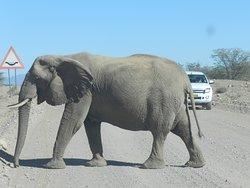 Gli elefanti la occupano