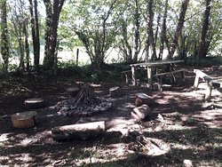 Fire pit and woodland area.