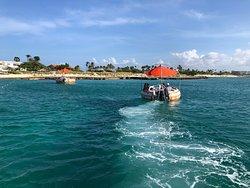 Octopus Aruba Boat Rental Service Palm Beach