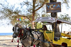 Horse carts waiting for guest in front of Villa Sunset Beach