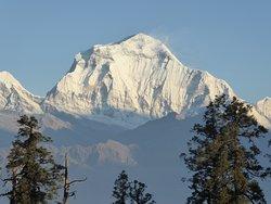 Dhaulagiri Mountain in Nepal, Nangi trekking in Nepal, Nangi trek with guide, Mahare dada trekking , Mahare dada,  Nagi Narchange trekking in Nepal, Annapurna trekking in Nepal ,  trek with guide Tulasi Ram Paudel