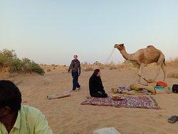 Crazy Camel Desert Safari