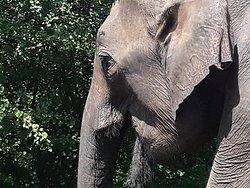 Udawalwa national park Sri Lanka