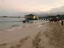 Horses next to the pier
