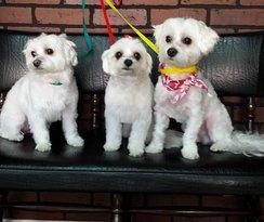Grooming pups