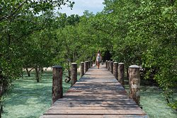 Mangrove Jetty