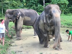 Aonang Elephant Sanctuary