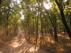 Pench forest trail from Khursapar gate in Pench