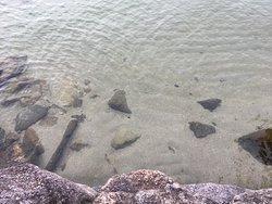 琵琶湖の水は驚くほどきれいでした。近くで湖水浴もできます。