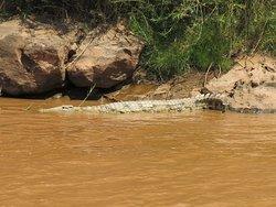 Lungo il fiume Tsiribihina