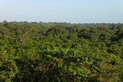 Bosque de Kahka Creek, en la reserva de Wawashang.