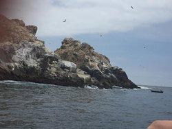 Paisaje Isla Palomino