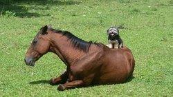 Cape Tribulation Horse Rides