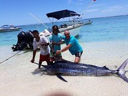 Pêche aux gros organisée par Dan sur bateau THALASSA ; Marlin bleu de 300 kg