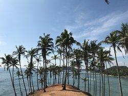 Coconut Beach - Sri Lanka