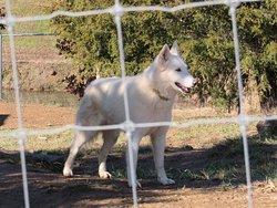 Wolf Paws Positive Awareness Wolfdog Sanctuary