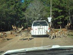 Van in front of us and wild animals.