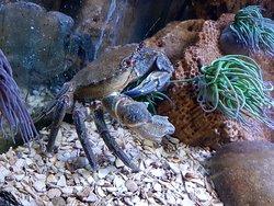 Sea aquarium Rhyl
