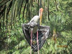 Many very interesting birds in the park