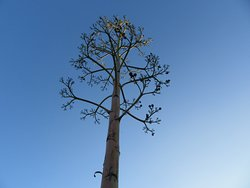 An agave spike we saw on our mezcal plantation tour with Zapotreks