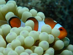 Yes you too can find Nemo