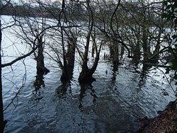 Trees in the Reservoir water. Southern side.