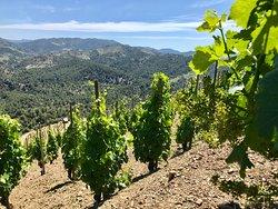 Customized Wine Private Tours in Priorat. Priorat Vineyards.