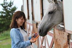 お馬のエサやり体験もできます♬