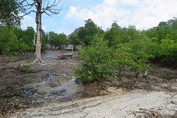 หมู่บ้านมอแกน แห่งนี้จะตั้งอยู่บริเวณ แนวป่าชายเลนครับ