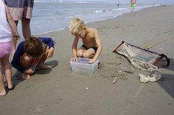 Ontdek welke dieren er in de zee leven tijdens het korren