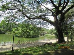 Nice paths and very pretty around the lake