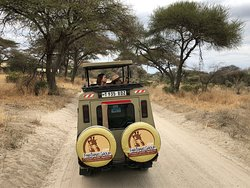 Safari in Tarangire