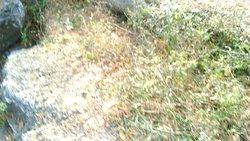 Tread the bushy path.
