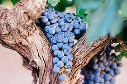 Chuyến tham quan & nếm rượu vang