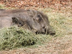 The locals nap in our garden sometimes. We suspect it might be because they get to stay free:-)