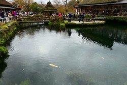八海で最大の湧水量のある池です。