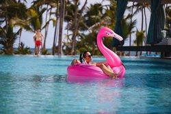 Domingo Flamingos!